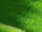 verde-montegrotto-no-al-cemento